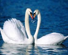 Angsa-love